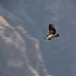 Cruz del Condor1.jpg