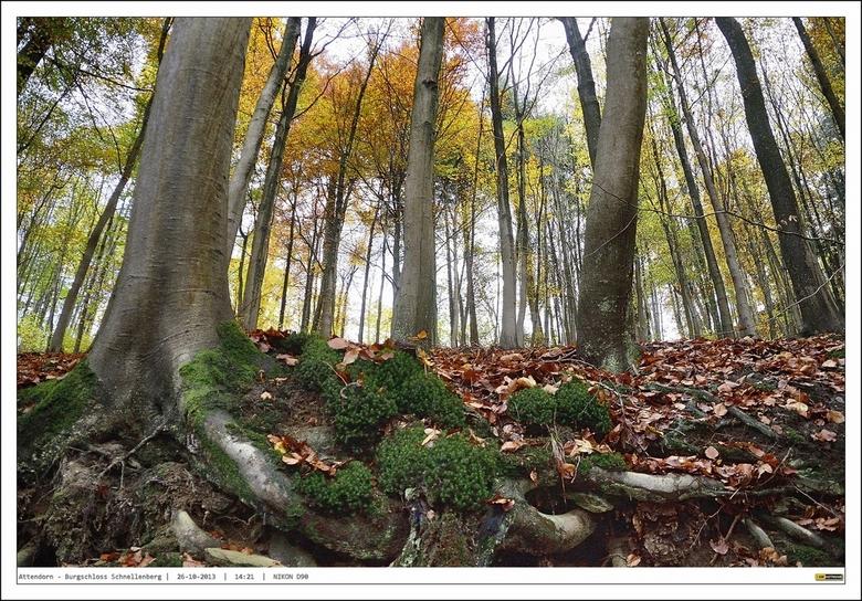 Van onderen......Herfstbomen - Plat langs het talud om vanuit de meest lage hoek deze prachtige bomen te fotograferen....<br /> <br /> <br /> Kijk