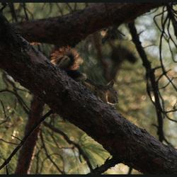 Eekhoorntje gespot aan de relaxpool