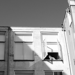 How much is that cat in the window?... - Den Haag