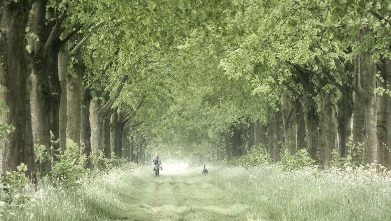 Walking the dog - Landweg nabij Schalkwijk