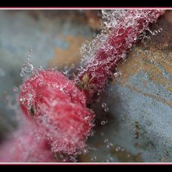 Pink Ribbon met Parels!