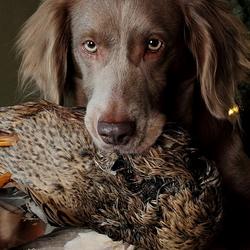 Hond met eend