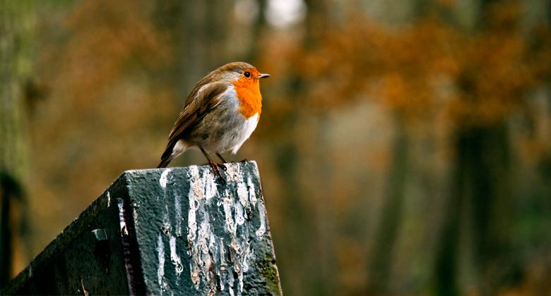 What to do if a bird shits on you...? - Loop je vrolijk rond tussen de tanks en het afweergeschut, land er ineens een roodborstje op de loop van een t