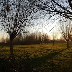 Bomen-Bos-Doorkijk-Natuur-Ondergaande Zon