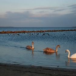 Valavond Grevelingenmeer