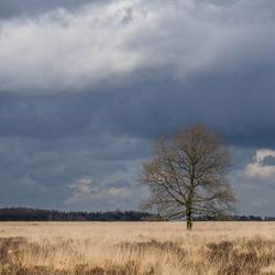 boom op het Noordscheveld
