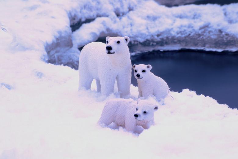 IJsberen - .....