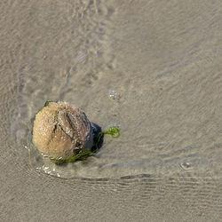 Zeeklit (zee-egel)
