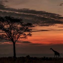 Zonsondergang Oeganda