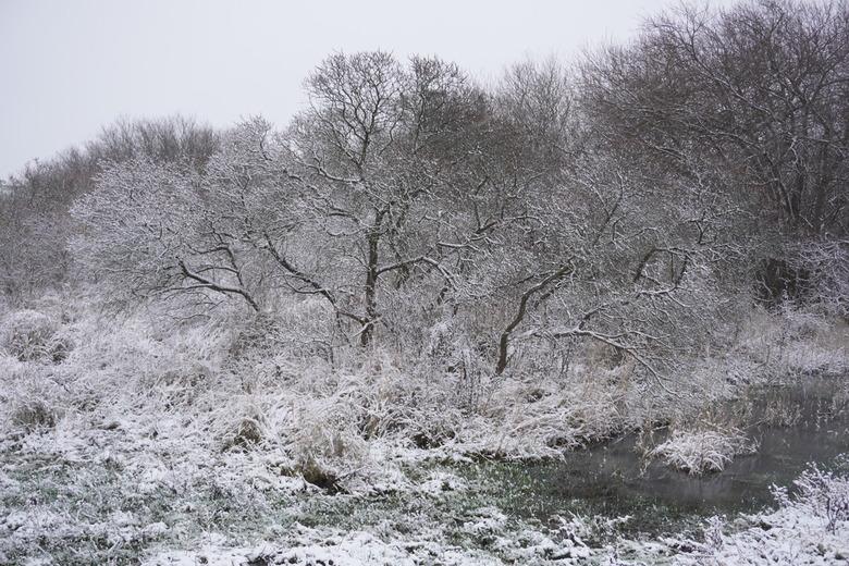 Sneeuw op Flakkee! - Genieten vandaag..