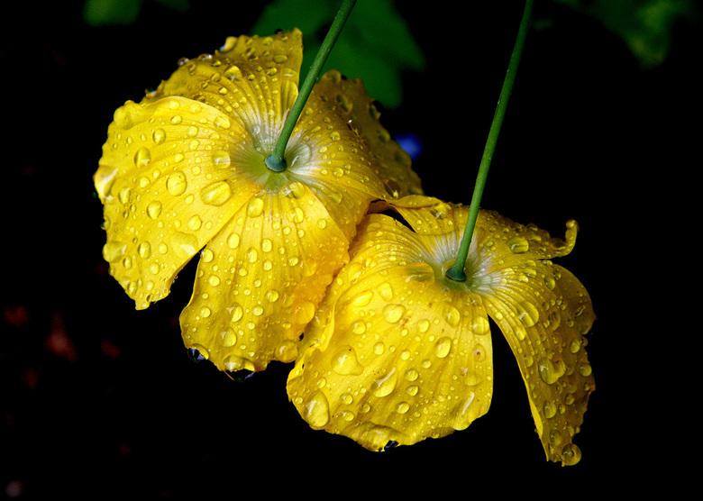 a bloem2.jpg - Na een regenbui.