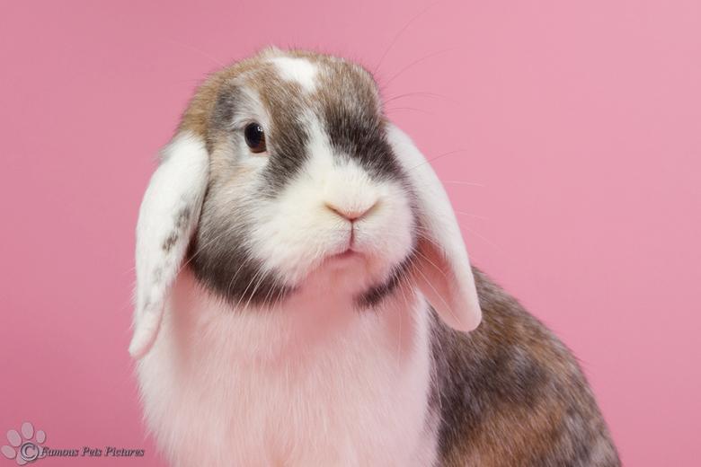 """Pebbles 'Pretty in pink' - Ook Pebbles houdt als echt meisje wel van roze <img  src=""""/images/smileys/tongue.png""""/>"""