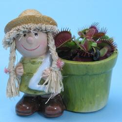 Dionaea Doll