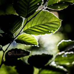 Door de bladeren