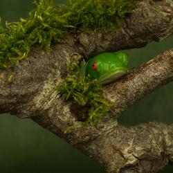 Froggie Special voor Hanny
