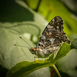 Eindelijk een vlinder