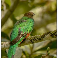 Quetzal, Ecuador.
