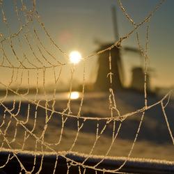 Spinnenweb met ijskristallen