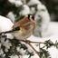 putter in de sneeuw