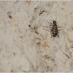 matingbugs