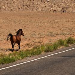Mustangs 1