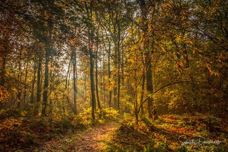 Hollandse Herfst - Hollandse Herfst