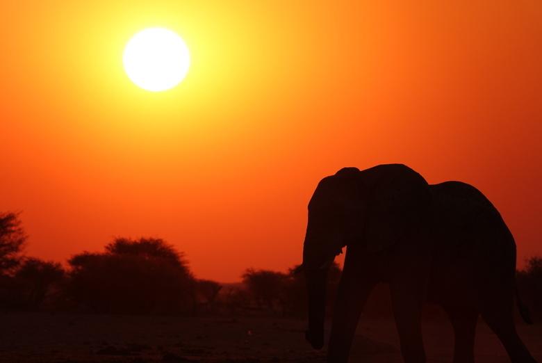 Olifant bij ondergaande zon - Compositie waarbij ik gebruik heb gemaakt van tegenlicht en er een mooi silhouet van de olifant ontstaat.