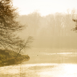 Misty Morning AWD