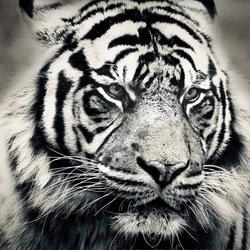 een mooie doordringt blik die je zo aan kijk in je lens gemaakt bij diergaarde Blijdorp