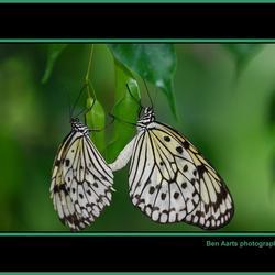 *vlindertuin Leidschendam