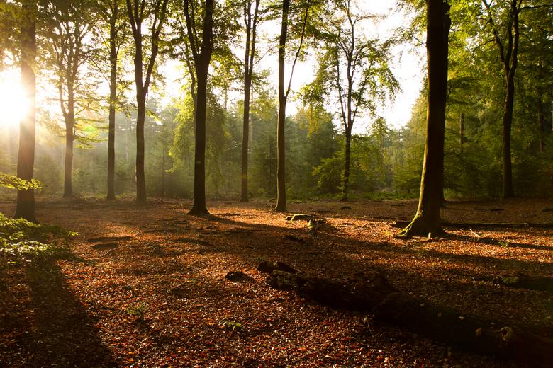 Zonnestralen in Sprielderbos - Op een bewolkte zaterdagmorgen kwam de zon toch tevoorschijn waardoor ik deze foto kon maken.