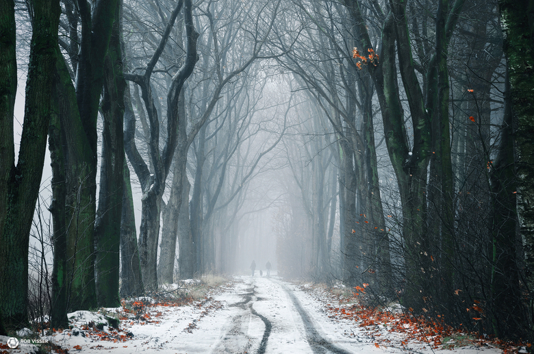 Dark dutch hedges - Weg door een donker winter bos.
