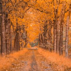 laantje in de herfst