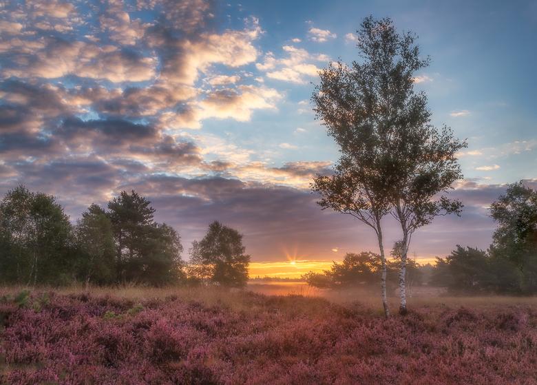 Blooming Heather - Wanneer je op de Veluwe woont, dan moet je in deze periode echt wel even geregeld  naar de hei  om te genieten .