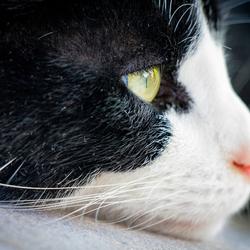 Kat starend in de verte