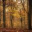 bronzen herfst