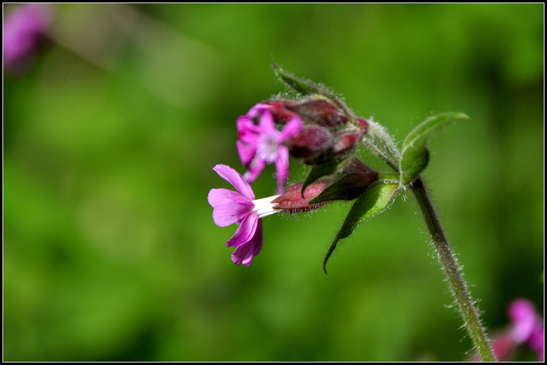 flower - close-up van een prachtig bloempje in de doode bemde in leuven