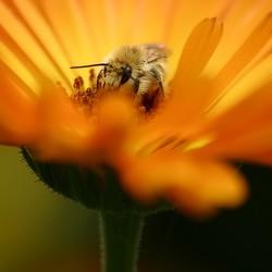 in een bloemenmand