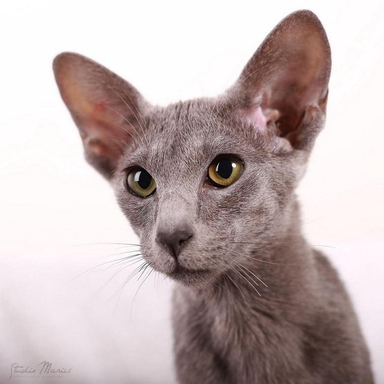 The amazing eyes of a cat! - The amazing eyes of a cat!