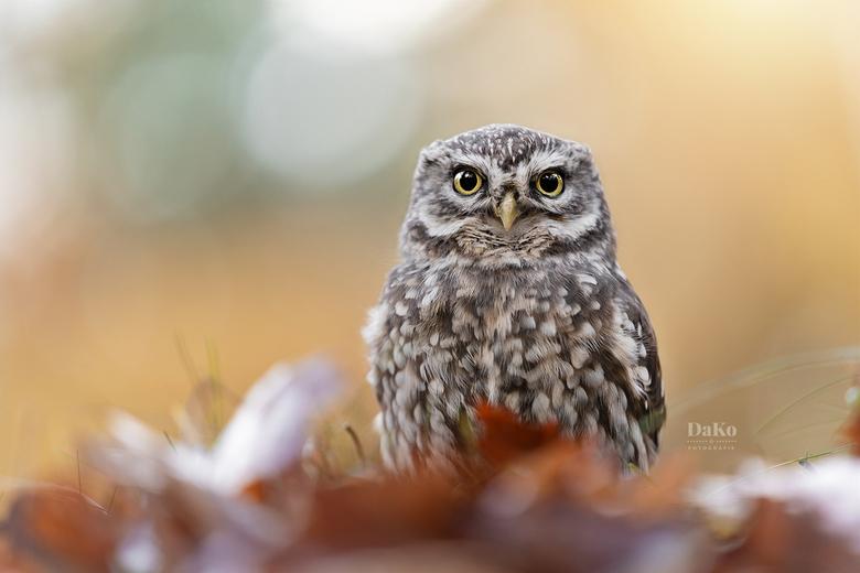 Angry bird -