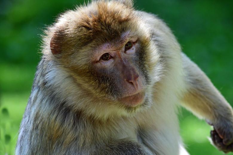 wat zien ik...?!  #3 - Bij de ingang van het apenbos van Naturzoo Rheine, NordRhein Westfalen staat heel duidelijk een waarschuwing geen tassen, etens