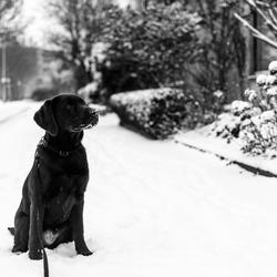Kai, onze hond in de sneeuw.
