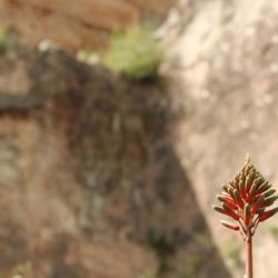 Alanya Castle flower