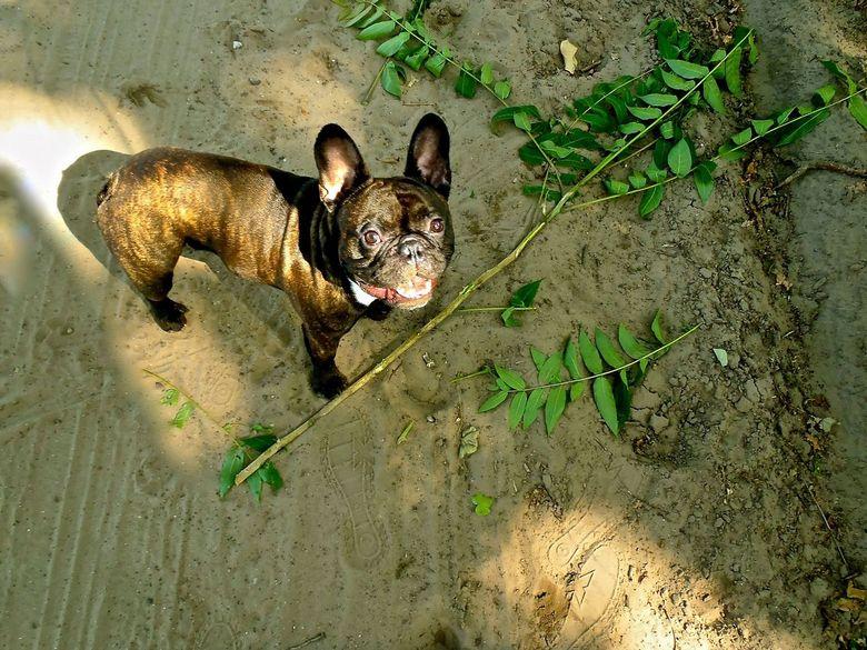 Hond met tak... - Wat zou een leven zonder takken toch saai zijn....