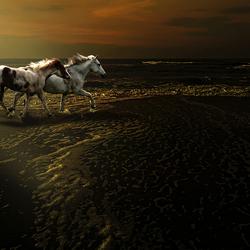 Maandragende paarden