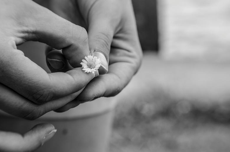 flower - gemaakt met lensbaby composer