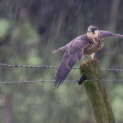 Standing in the rain!