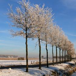 Winterwonderland Elst gld