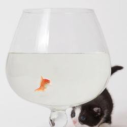 kleine met visje